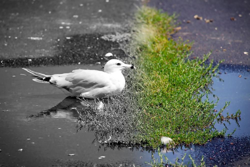 Bird ColorBW